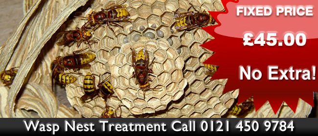Wolverhampton Wasp Control, Wasp nest treatment or removal fixed price £35.00 covering Wolverhampton, Birmingham and The West Midlands. Contact us on  01922 610 932 / 0121 450 9784  for more info